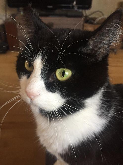 df525dbb Dyrenett.no-> Annonser Katt-> Katt mistet/funnet-> Svart og hvit ...